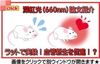 深紅光(660nm)論文紹介 ラットで実験!血管新生を促進!?